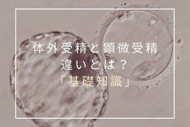 体外受精と顕微授精の違い【コラム・東京鍼灸】