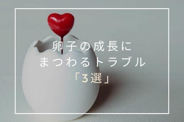 卵子の成長にまつわるトラブル【コラム・東京鍼灸】