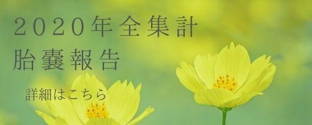 """""""東京鍼灸烏森通り2020年胎嚢報告全期間""""width="""